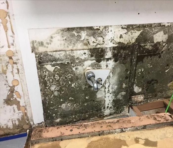 A wall full of mold